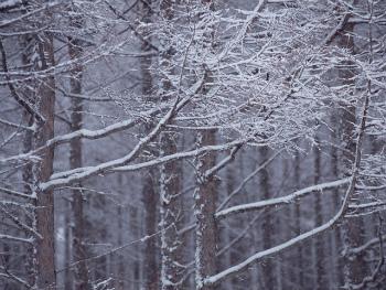 きびだんご王国の冬の森